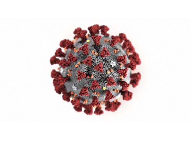 Coronavirus-White